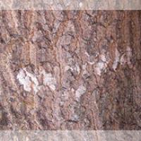 Nux Vomica bark