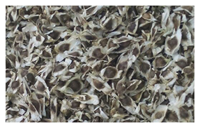Moringa Leaves & Seeds